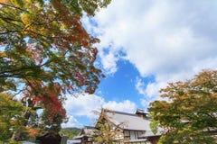 Klonowi drzewa w ogródzie przeciw niebieskiemu niebu przy Kinkakuji świątynią Zdjęcia Royalty Free