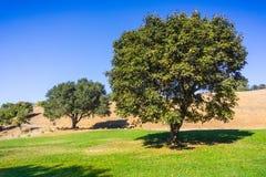 Klonowi i dębowi drzewa obrazy stock