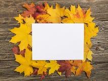 Klonowi liście i przestrzeń dla zawiadomienia Zdjęcia Royalty Free