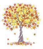 klonowy drzewo ilustracja wektor