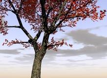 Klonowy Drzewo 2 Zdjęcia Stock