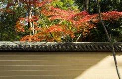 Klonowy drzewo blisko Japan ogrodzenia Obraz Stock