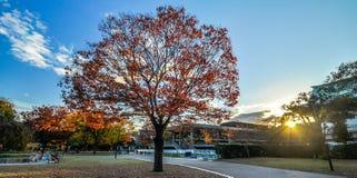 Klonowy drzewo w Kyoto, Japonia fotografia royalty free