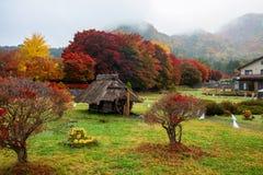 klonowy korytarz przy jesienią, Kawaguchiko Fotografia Royalty Free