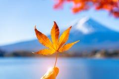 Klonowy urlop w palcu z Mt Fuji t?o zdjęcie royalty free