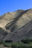 Kloof en kleine koe, Rumback-dorp, Ladakh, India Stock Afbeeldingen
