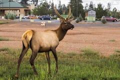 Kloofpool in het de het de Geiserbassin, bos en hemel van de het Westenduim als Nationaal Park achtergrond van Yellowstone, bezin Stock Fotografie