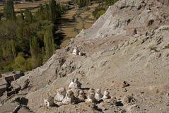 Klooster, Basgo, Ladakh, India Stock Foto's