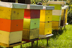Klosterbienenhaus mit vielen Bienen Stockfoto
