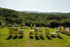 Klosterbienenhaus mit vielen Bienen stockfotos