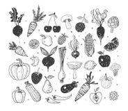 Klotterfrukter och grönsaker Vektorn skissar illustrationen av sund mat Arkivfoto