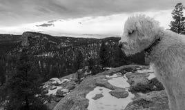 Klottra att kika in i Winterscape Fotografering för Bildbyråer