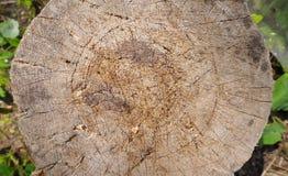 Klotz für das Hacken des Holzes Stockfotografie