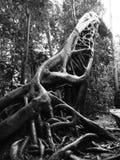 Klotz mit drei Bäumen lizenzfreie stockbilder