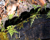 Klotz mit Forest Moss Stockfotografie