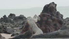 Klotz am Strand mit Felsen stock video footage