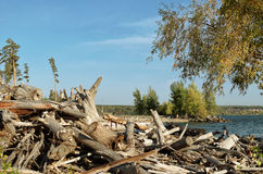 Klotz und Treibholz auf dem Strand Stockbilder