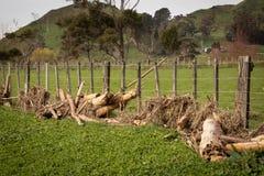 Klotz verwickelt in einem Bauernhofzaun nach der Überschwemmung an Tolaga-Bucht, Neuseeland Lizenzfreie Stockfotografie
