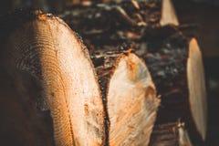 Klotz von Bäumen im Wald nachdem dem Fällen Gefällte Baumkabel protokollieren Selektiver Fokus auf Foto lizenzfreies stockfoto