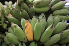 Kluai Namwa banan Fotografia Stock