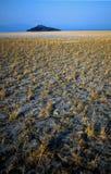 Kluane Mountain Range with Yellow Field Royalty Free Stock Photos