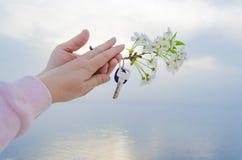 Klucz nowy dom i gałąź czereśniowi okwitnięcia w ręce Obraz Royalty Free