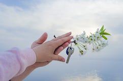 Klucz nowy dom i gałąź czereśniowi okwitnięcia w ręce Fotografia Royalty Free