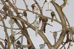 Klucze kędziorek na białym tle zdjęcie royalty free