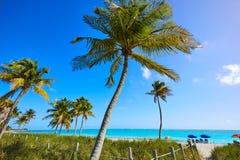 Kluczowi zachodni Florida Smathers plaży drzewka palmowe USA obraz stock