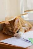 Kluge Katze Stockfotografie