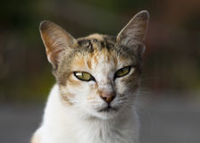 Kluge Katze Stockfotos