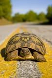 Kluge Schildkröte. Lizenzfreie Stockfotos