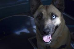 Kluger Hund Stockfoto