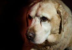 Kluger Hund des Hund 14 lizenzfreie stockfotos