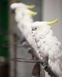 Kluger Papagei Stockbild
