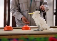Kluger Papagei Stockfotos