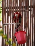 Kluger Papagei Lizenzfreie Stockfotografie