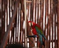 Kluger Papagei Stockbilder