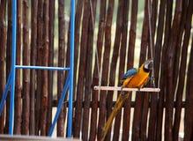 Kluger Papagei Lizenzfreies Stockbild