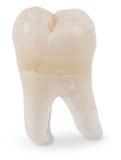 Klugheit-Zahn