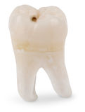 Klugheit-Zahn mit Raum Stockbild