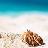 Kluizenaarkrab bij strand royalty-vrije stock afbeeldingen