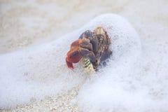 Kluizenaarkrab in de Branding die omhoog op het Strand wassen royalty-vrije stock afbeelding