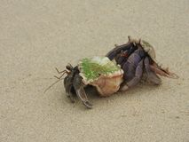 Kluizenaarkrab op het zandige strand Royalty-vrije Stock Afbeeldingen