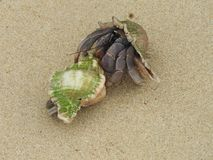 Kluizenaarkrab op het zandige strand Stock Foto