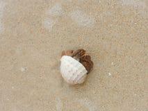 Kluizenaarkrab op het zandige strand Royalty-vrije Stock Foto