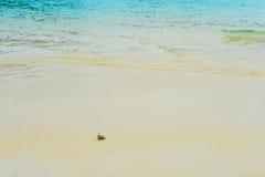 Kluizenaarkrab op overzeese zonnige stranden Stock Afbeelding