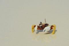 Kluizenaarkrab op overzeese zonnige stranden Stock Foto