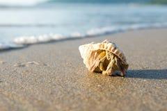 Kluizenaarkrab op tropisch strand stock afbeelding