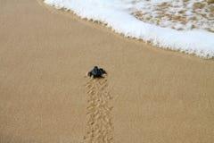 Klujący się denny żółw opuszcza odciskom stopy w mokrym piasku na nim ` s sposób w morze zdjęcia stock